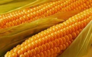 玉米大国风云录:未来市场谁主宰?