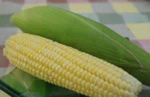 近期玉米市场投资分析