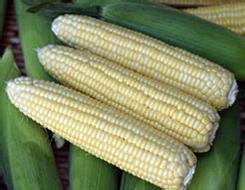 """""""后临储时代""""的玉米市场如何破中有立?"""