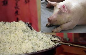 豆渣怎样才能喂猪?养猪户务必注意饲喂方法!
