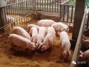 猪寄生虫病是猪三大类疾病 传染 -自媒体 自媒体平台图片