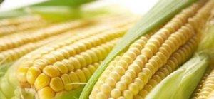 新玉米价格会不会大跌?看专业人士怎么说