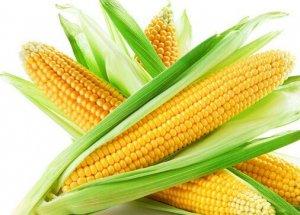 新玉米开始上市,贸易商不要存货,随进随出,注意风险