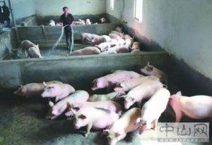 在禁养区建养殖场最高罚50万元并责令拆除?