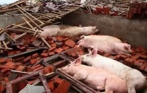 环境评估猪场始终逃不过的坎,不改就折你的猪场......