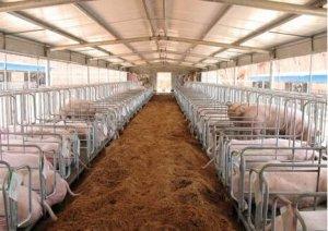 政府限制养猪?NO 农业部拟加大对生猪调出大县奖励