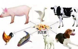 兽药协会丨现阶段我国难弃动物抗生素