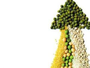 国内豆粕价格持续上涨后 上方空间还有多大?