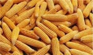 扭转玉米行情国家只需四味药