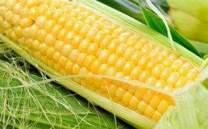国内外玉米价格倒挂现象基本不再
