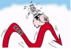"""生猪价曾持续数月""""高烧""""后缓慢"""