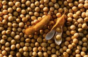 美豆价格承压下跌,国内压榨利润好转