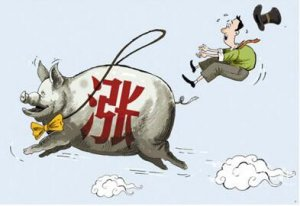 猪价或还能重回9元 最重要的是头均盈利水