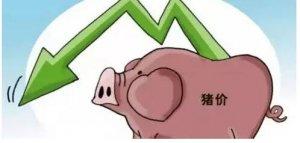 猪市的动荡:大企业跑马圈地 散养户持续退出