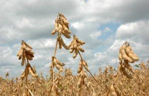 10月美国农业部大豆豆粕月度供需报告