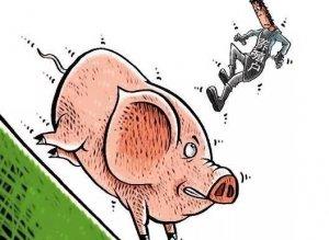 跌价32%!生猪3.7元/斤!为什么规模化如此之高的美国也大跌