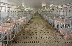 养猪户将猪舍建在居民区 红安环保部门迅速调查