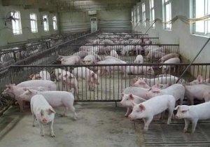新建猪场该如何选购设备