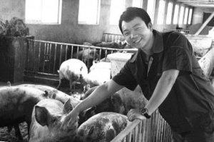 """猪场到底补不补栏?养殖户头疼不已""""二师兄""""是怎么了"""