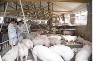 粤桂联手整治跨界河流 桂数十万头生猪搬家
