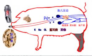 关于母猪便秘根源的几点思考