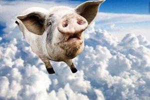 气温回落 北方多省猪价上涨 南方局部反弹