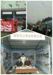 湖南天心种业有限公司成功参展中国武汉种猪拍卖会