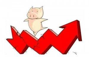 10月猪价还能否继续上涨?养殖户普遍求稳