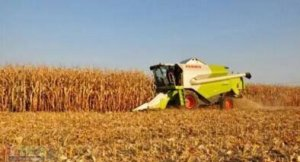 玉米价格狂跌!农民现在卖划算吗?国家还会想办法抬升价格吗?
