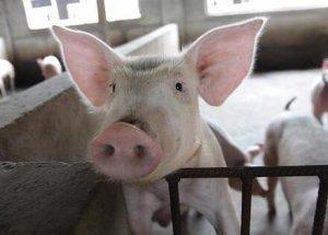 猪价涨了一周,重回8元时代 就连猪肉进口量也终于
