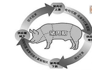 """新五丰:逢""""猪周期""""业绩起飞 前三季度净利增22倍"""