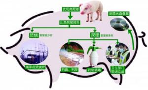 重视三个细节,做好猪场环保