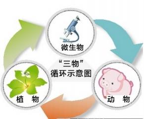 湖南生态养猪正逢其时 规模养猪从禁养区退出