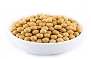 美豆进口成本上升 11月到港量或增至600万