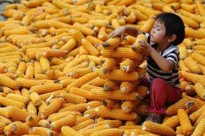泰国玉米等农产品价格持续走低