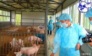 养猪问答十七:猪场消