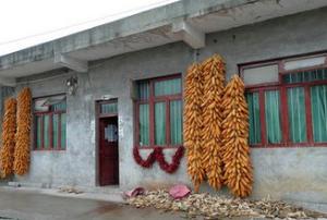 粮价倒挂:农民3万公斤玉米堆在场院舍不得卖