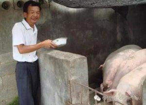 为什么美国猪肉没味道