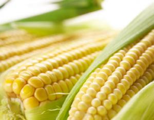 玉米到底是卖还是不卖?!