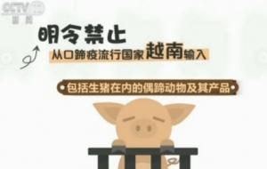 一天1.5万头越南生猪走私中国 联合执法如虚设