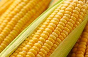 恶劣天气致玉米流通将至冰点