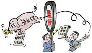 四川邛崃连夜审查走私猪流入的食品公司
