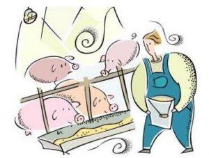 春节前猪价将保持窄幅上升趋势