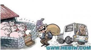 疯狂偷猪贼3次作案盗窃171头牧原仔猪,案犯最高被判处4年半徒刑