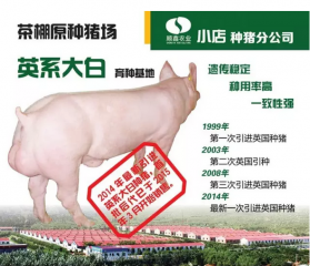 原种大白种猪送送送