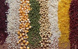 2016/17年度中国玉米产需实现基本平衡