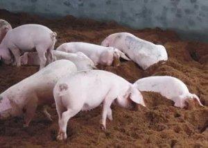 做好仔猪的饲养管理