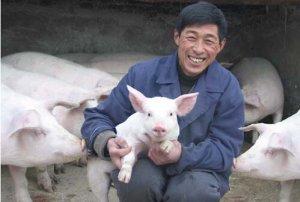 年末岁尾说猪价......