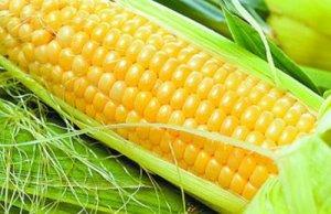 年前玉米市场最后一波卖压将来临!