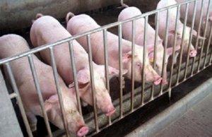 天津市宁河原种猪场被指定为猪肉供应商